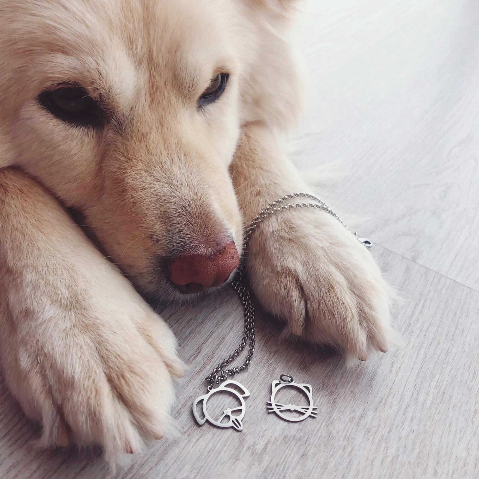 colar/pulseira pet