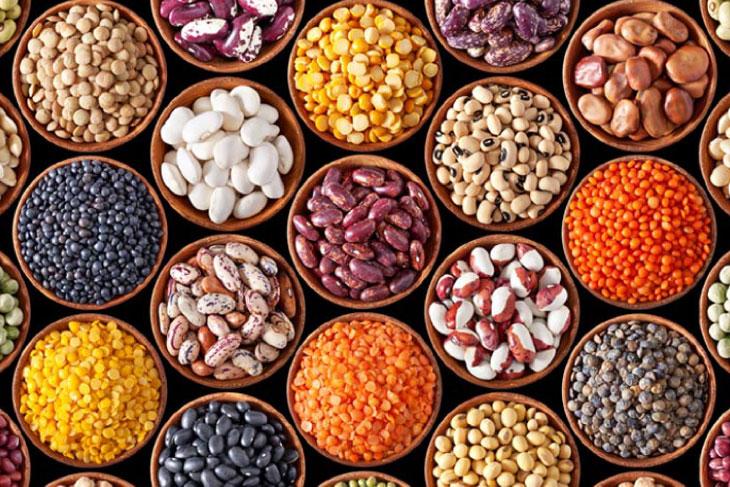 Proteína vegetal en la nutrición moderna