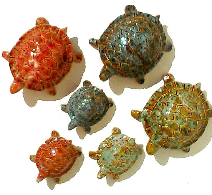Petite et moyenne tortue