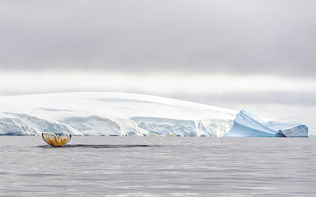 Grandes en Antártica