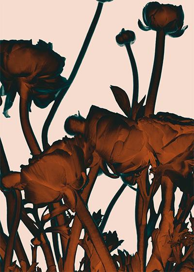 Flores Contraluz II