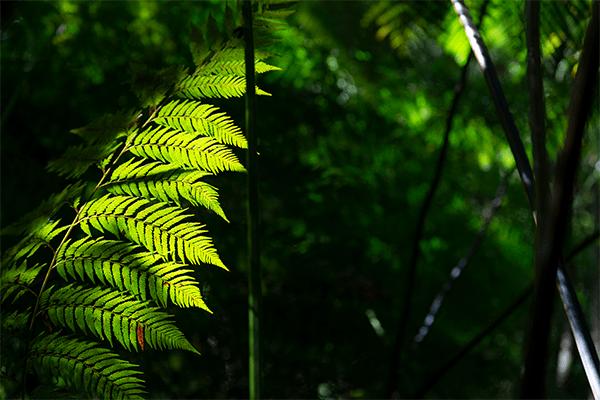 Claro oscuro verde