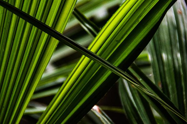 Entre Verdes II