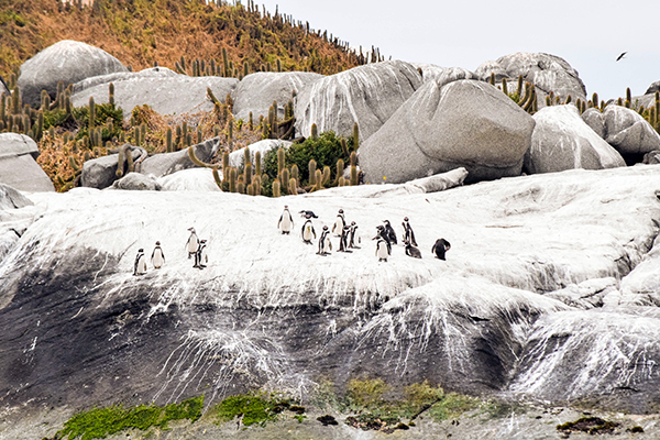 Isla los Pingüinos