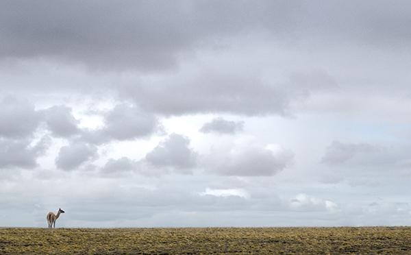La nada y el guanaco