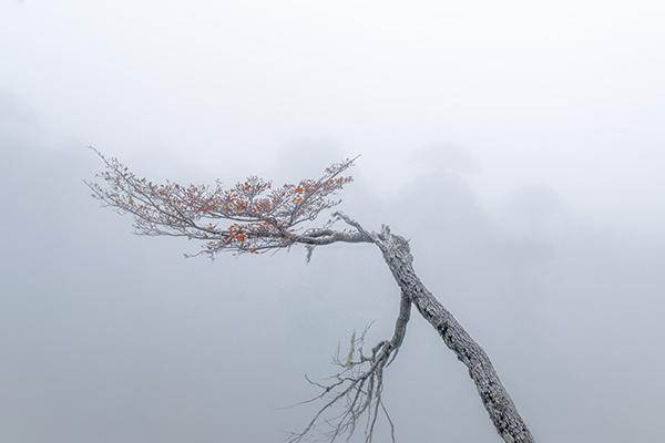 Neblina y fantasmas