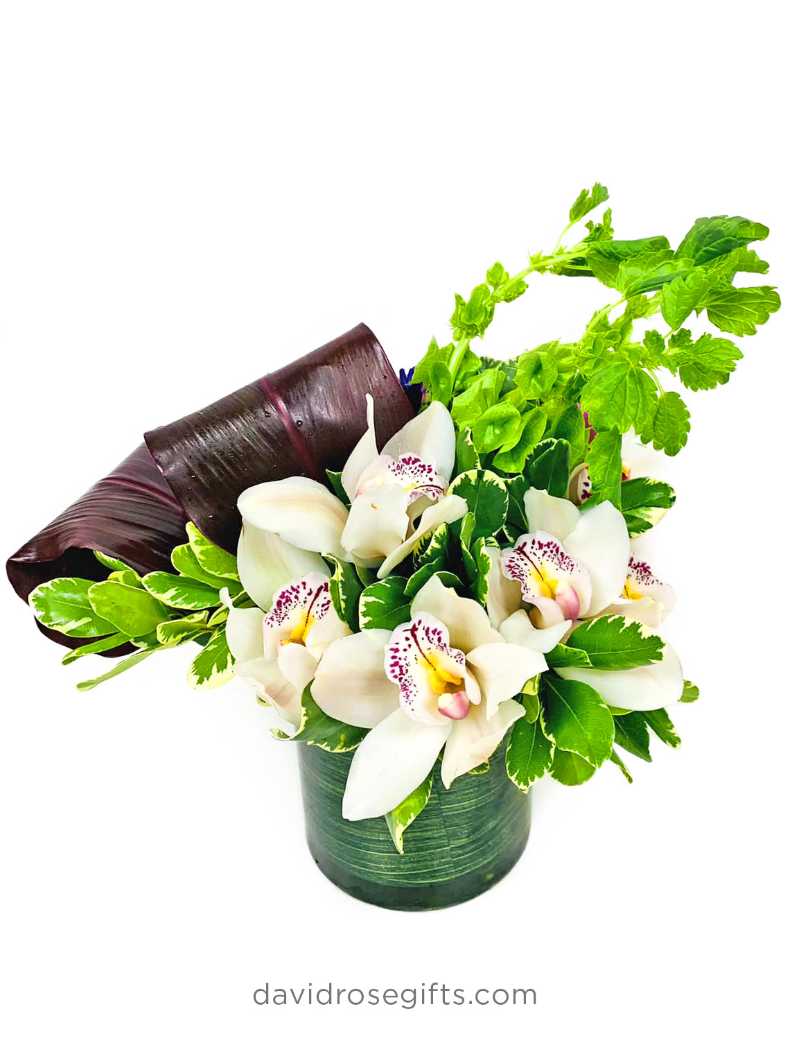 Luxury White Orchids