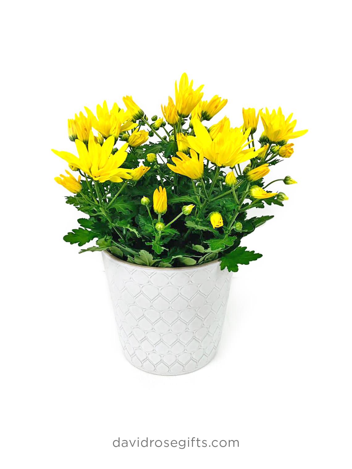 Daisy Pot