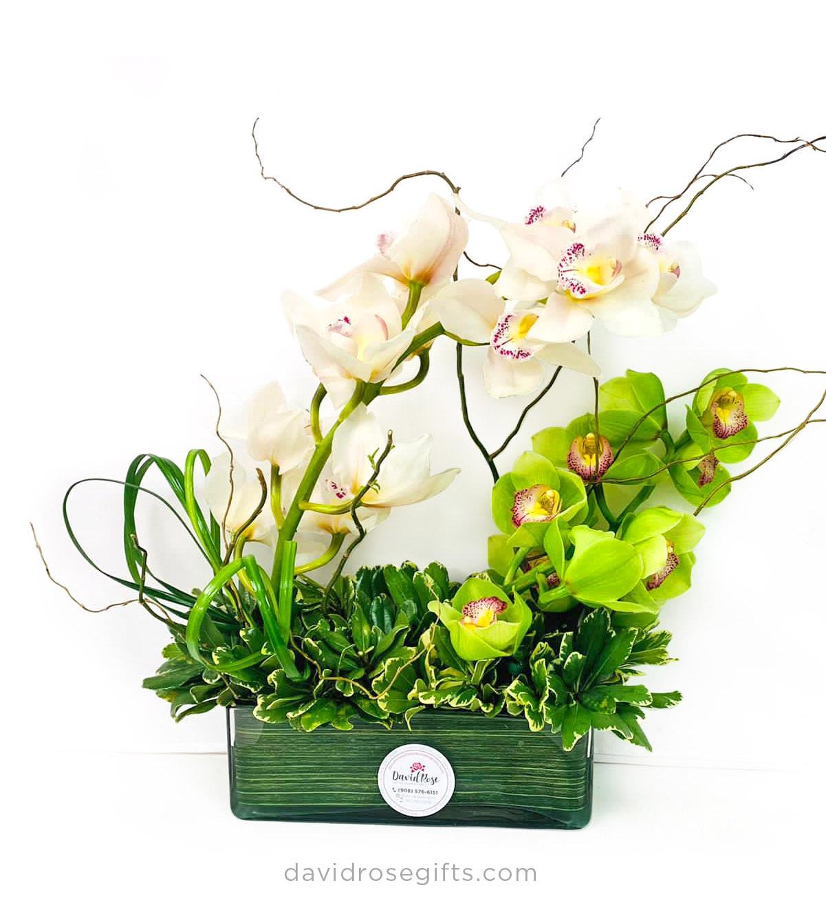 Orquídea Ultimate Elegance