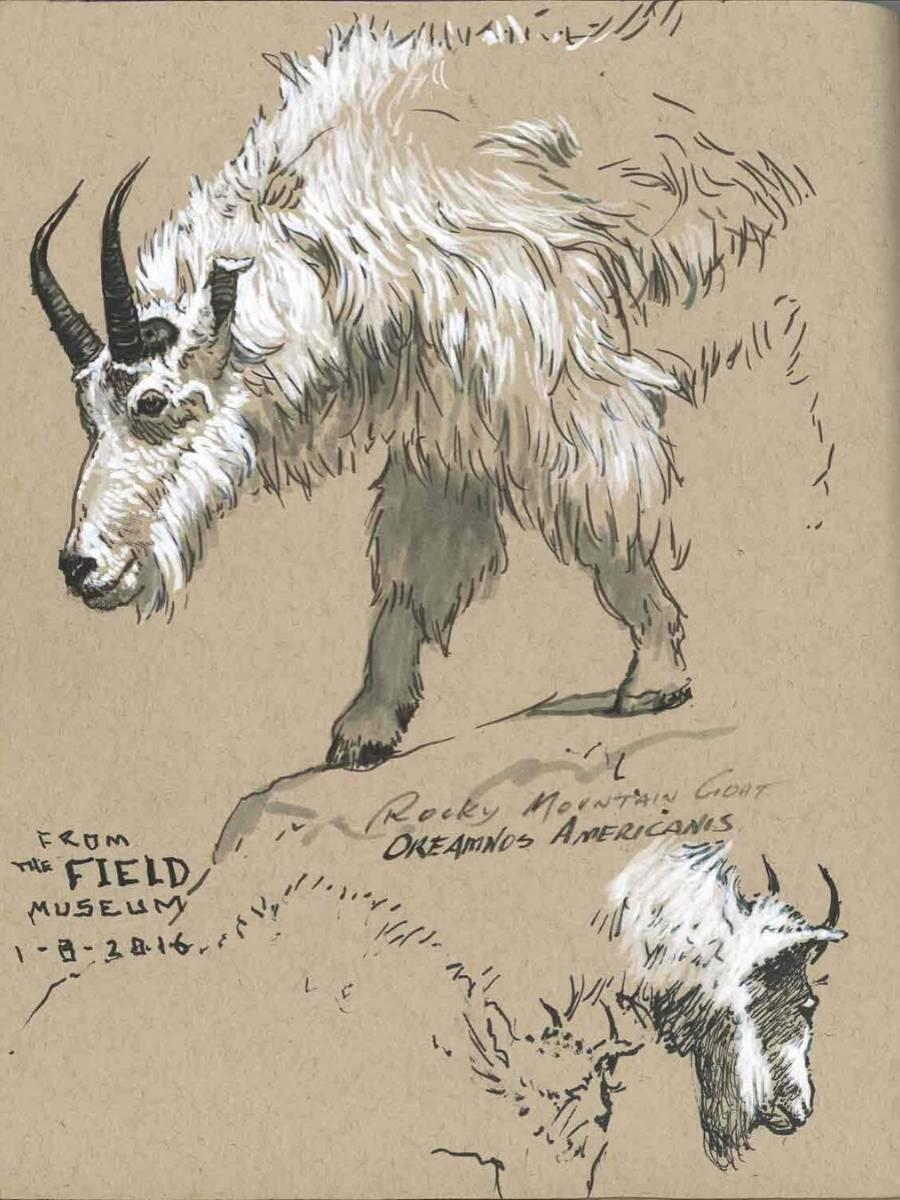 Faber-Castell Pitt Artist Pen - Black & White