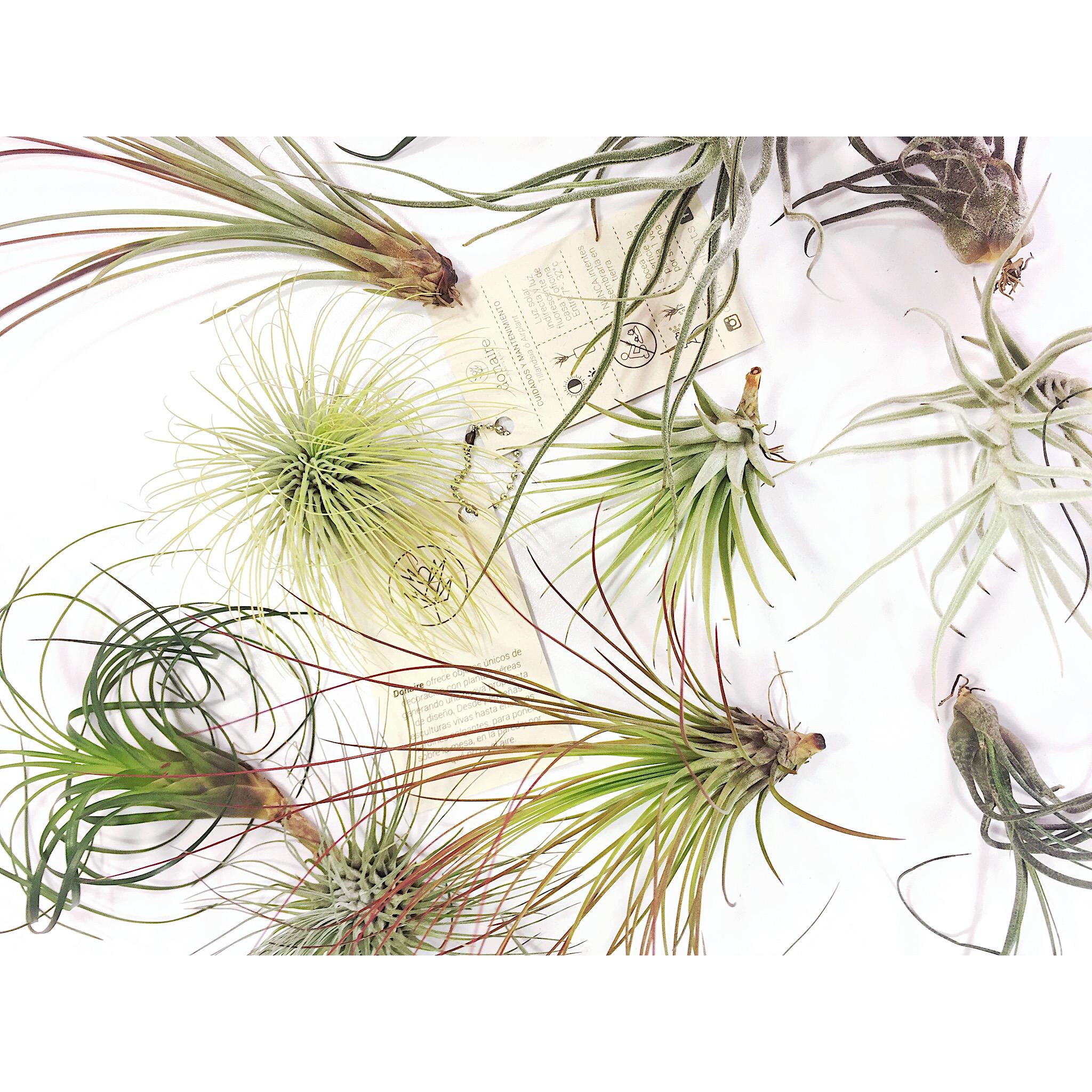 Colección de 3 plantas