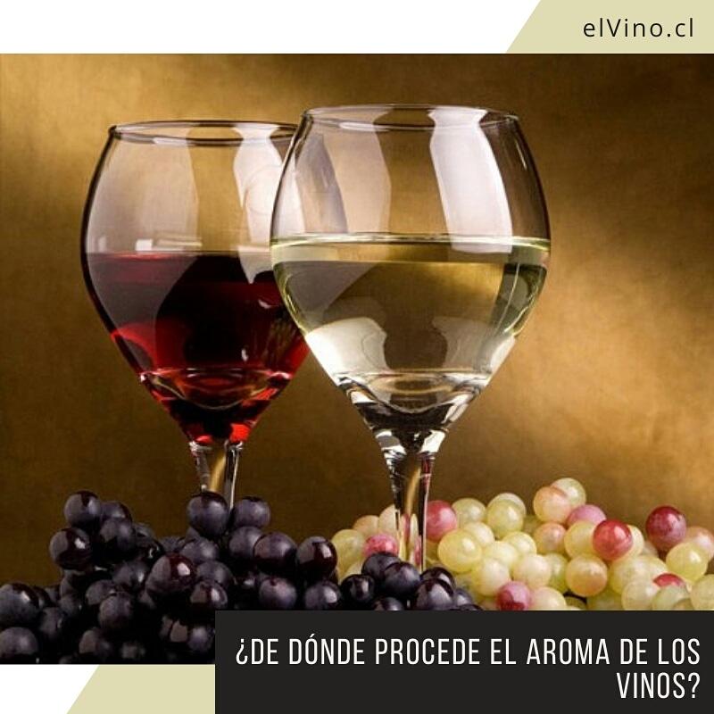 ¿De dónde procede el aroma de los vinos?
