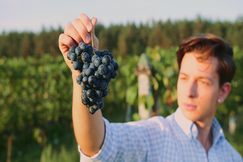 Seleção e cultivo das uvas
