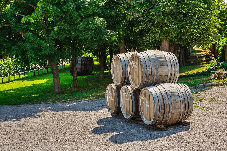 Conheça os melhores vinhos para tomar no verão e em temperaturas quentes