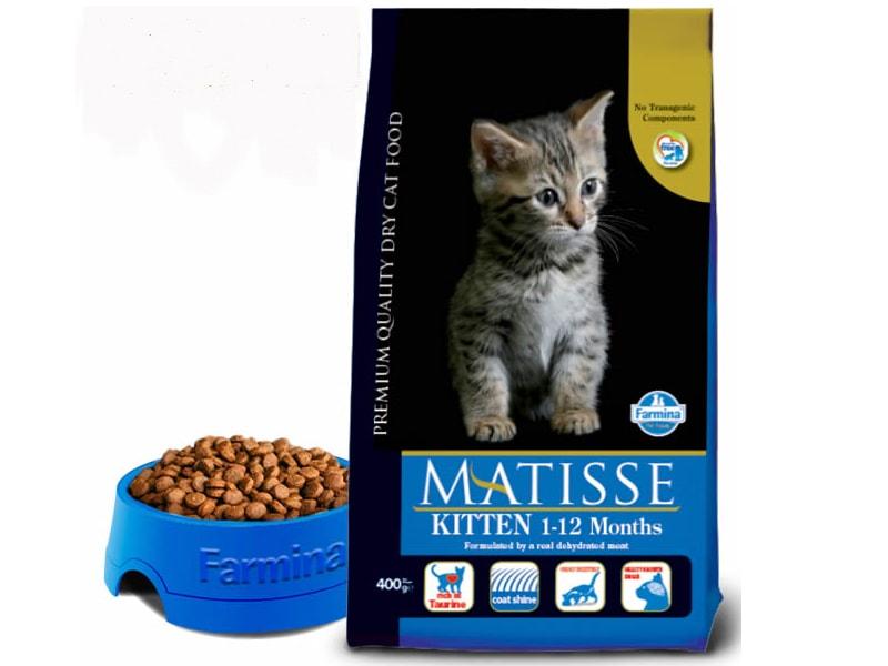 Matisse Fihotes (kitten)
