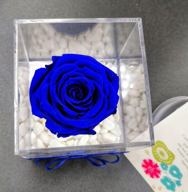 Rosa Eterna Azul