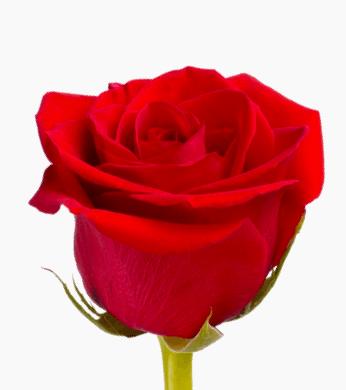 Ramo de 10 Rosas en Papel Kraft y Blanco