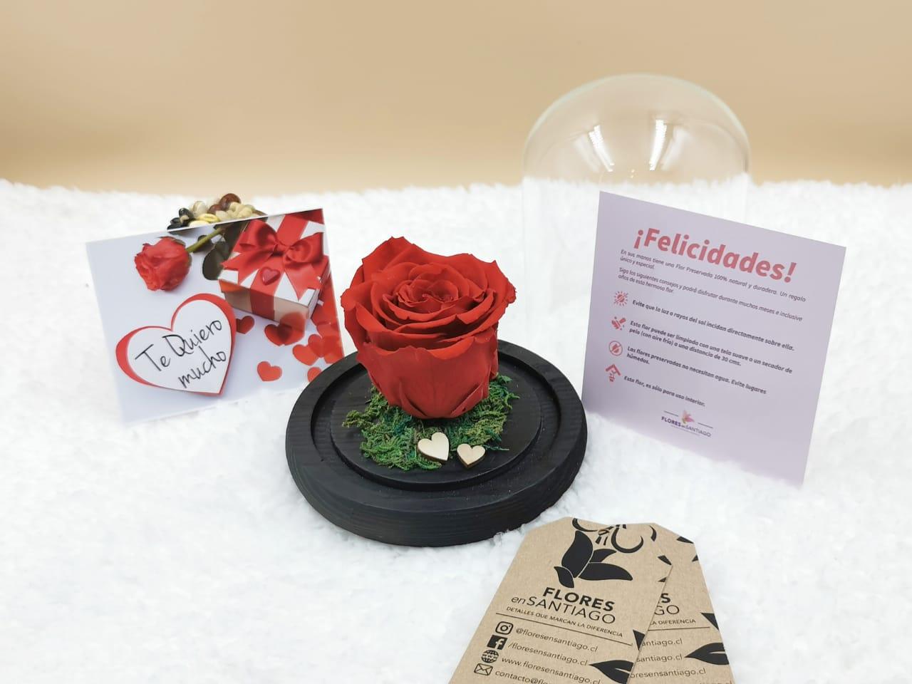 Baby Rose Roja (Pequeña)