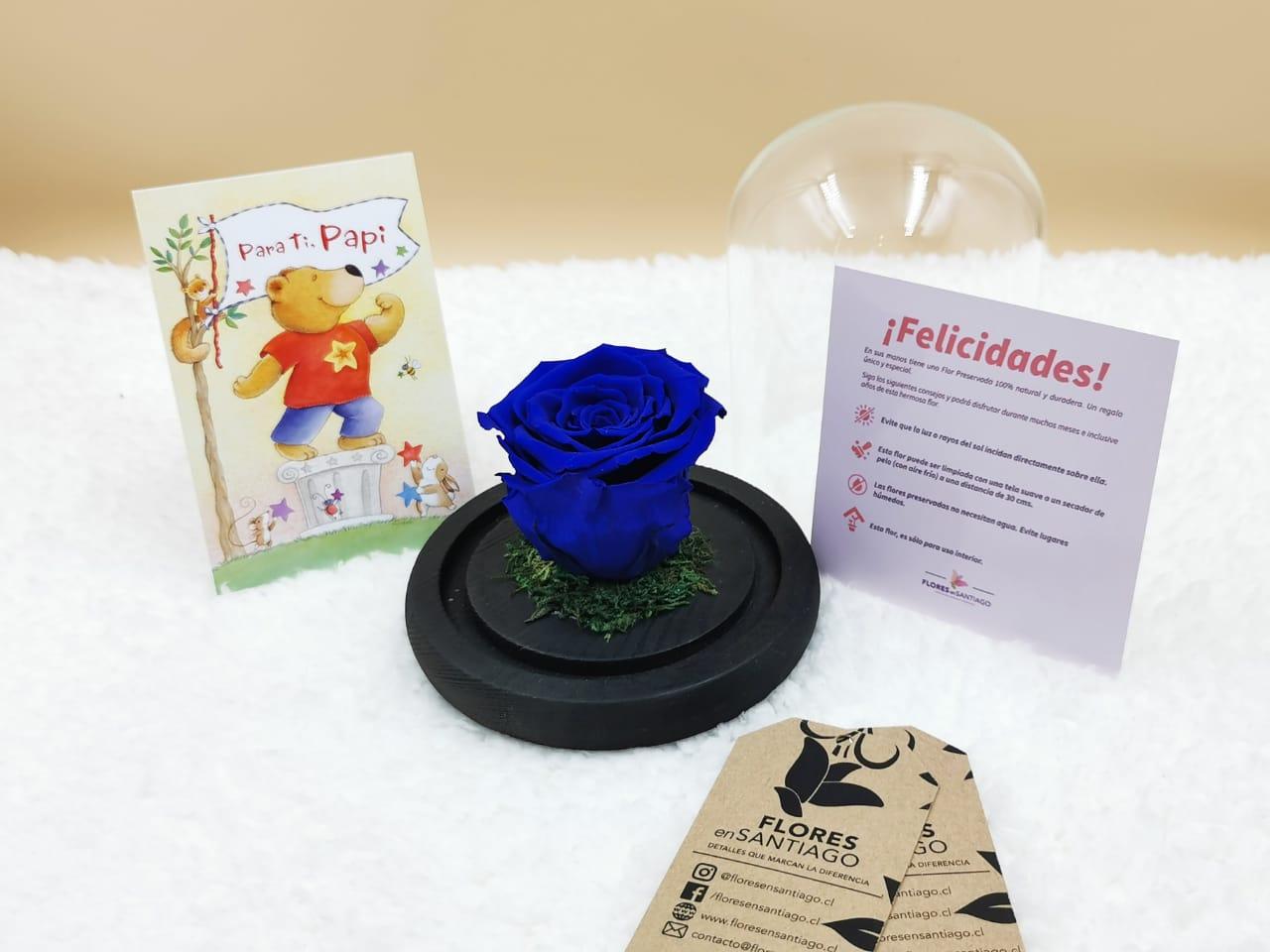 Baby Rose Azul (Pequeña)