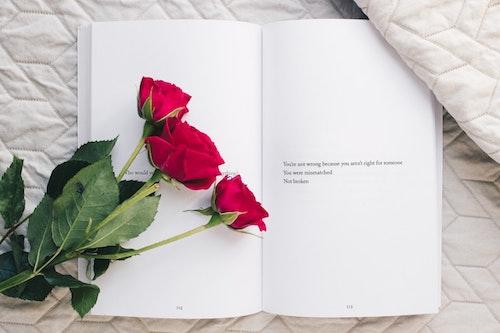Significado de la Rosa Eterna