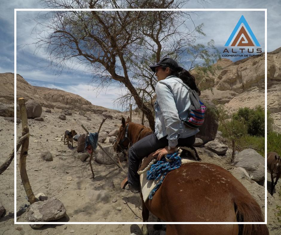 Rutas a caballo ¿conoces el turismo ecuestre de Tarapacá?