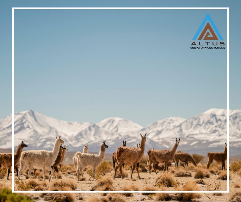 ¿Conoces estos 7 lugares de la región de Tarapacá y sus alrededores?