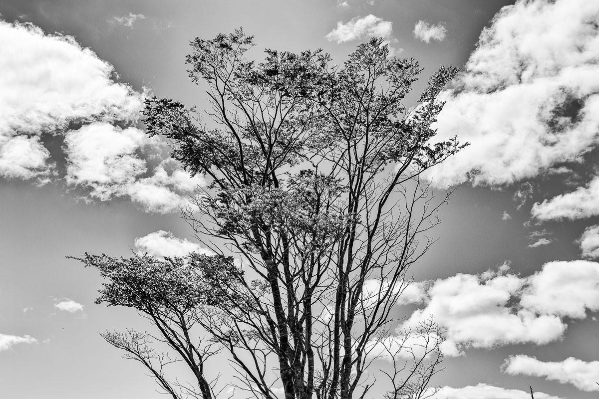 Toda tierra quiere ser bosque