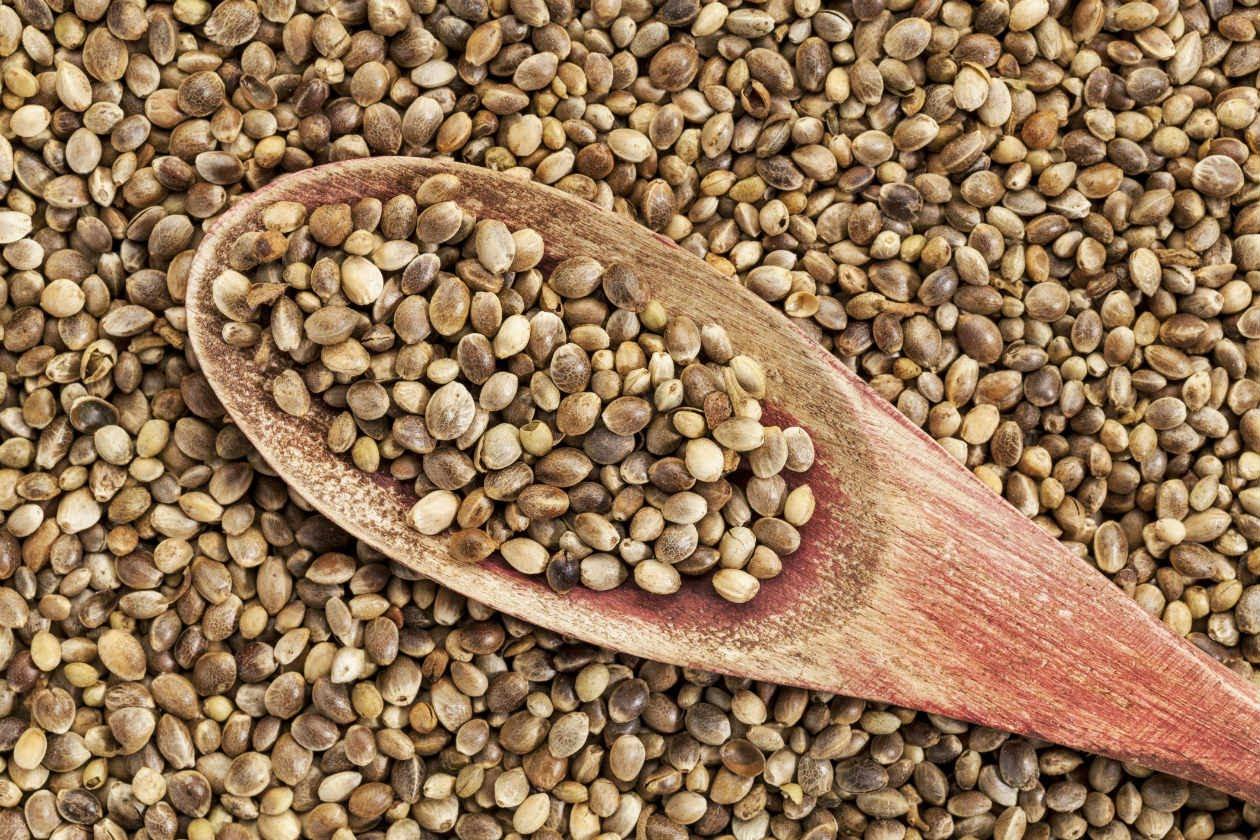 ¿Conoces la semilla de cáñamo y sus beneficios?