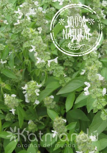 Aceite Esencial Albahaca 5 ml.