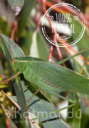 Aceite Esencial Eucalipto Radiata 5 ml.