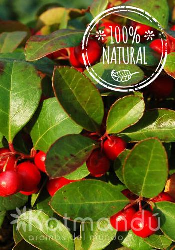 Aceite Esencial Gaulteria 5 ml.