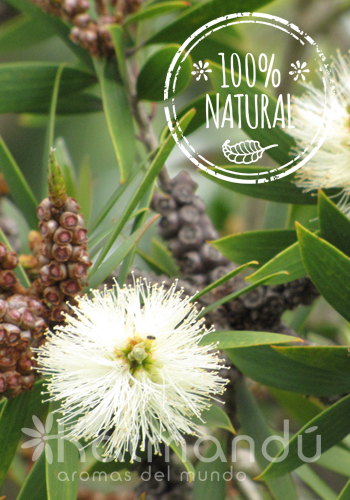 Aceite Esencial Niauli 5 ml.