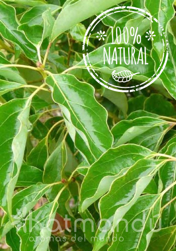 Aceite Esencial Ravintsara 5 ml.