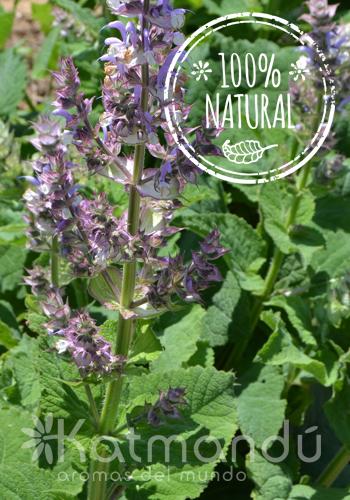 Aceite Esencial Salvia romana 5 ml.