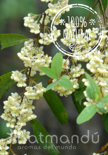 Aceite Esencial Verbena Exótica