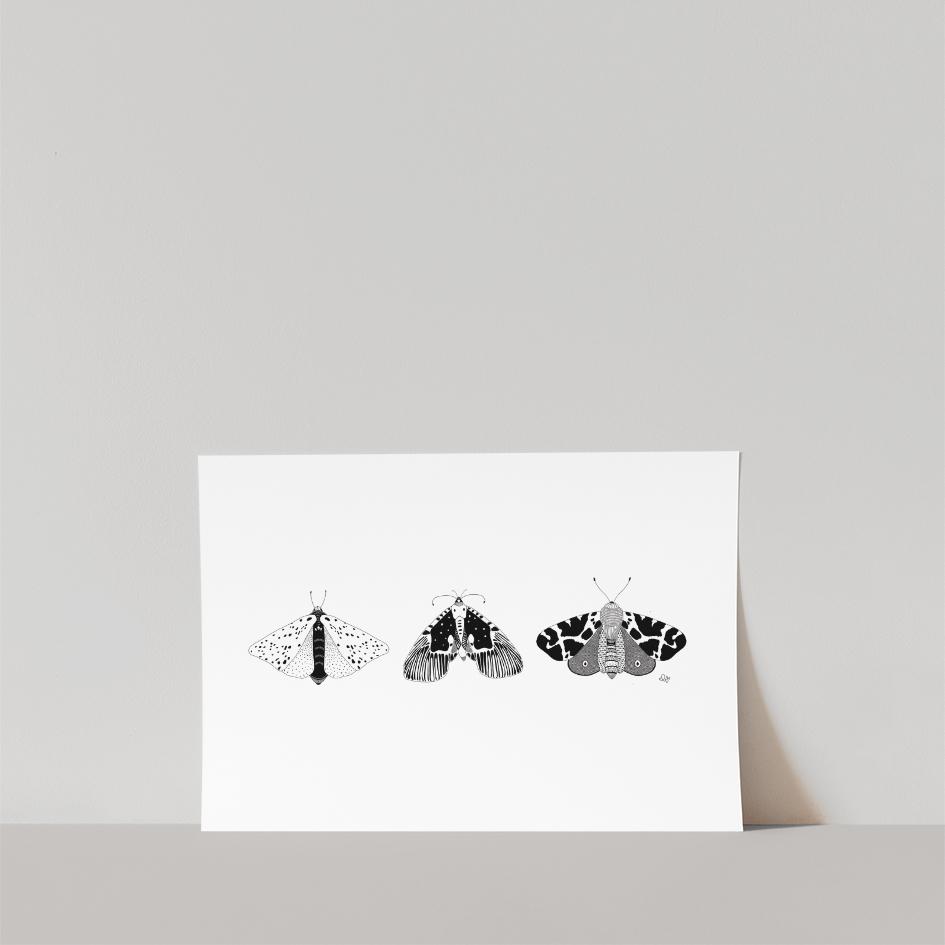 Lámina Mariposas