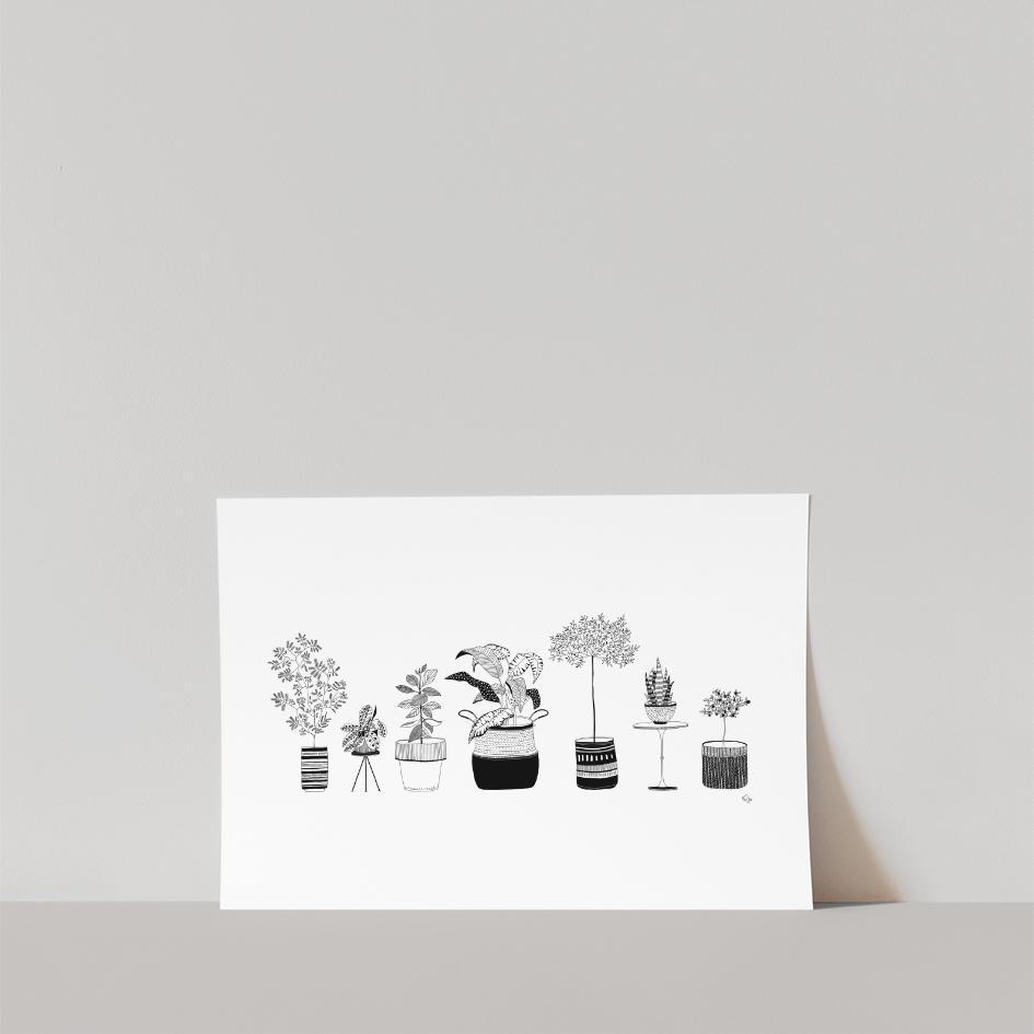 Lámina Plantas