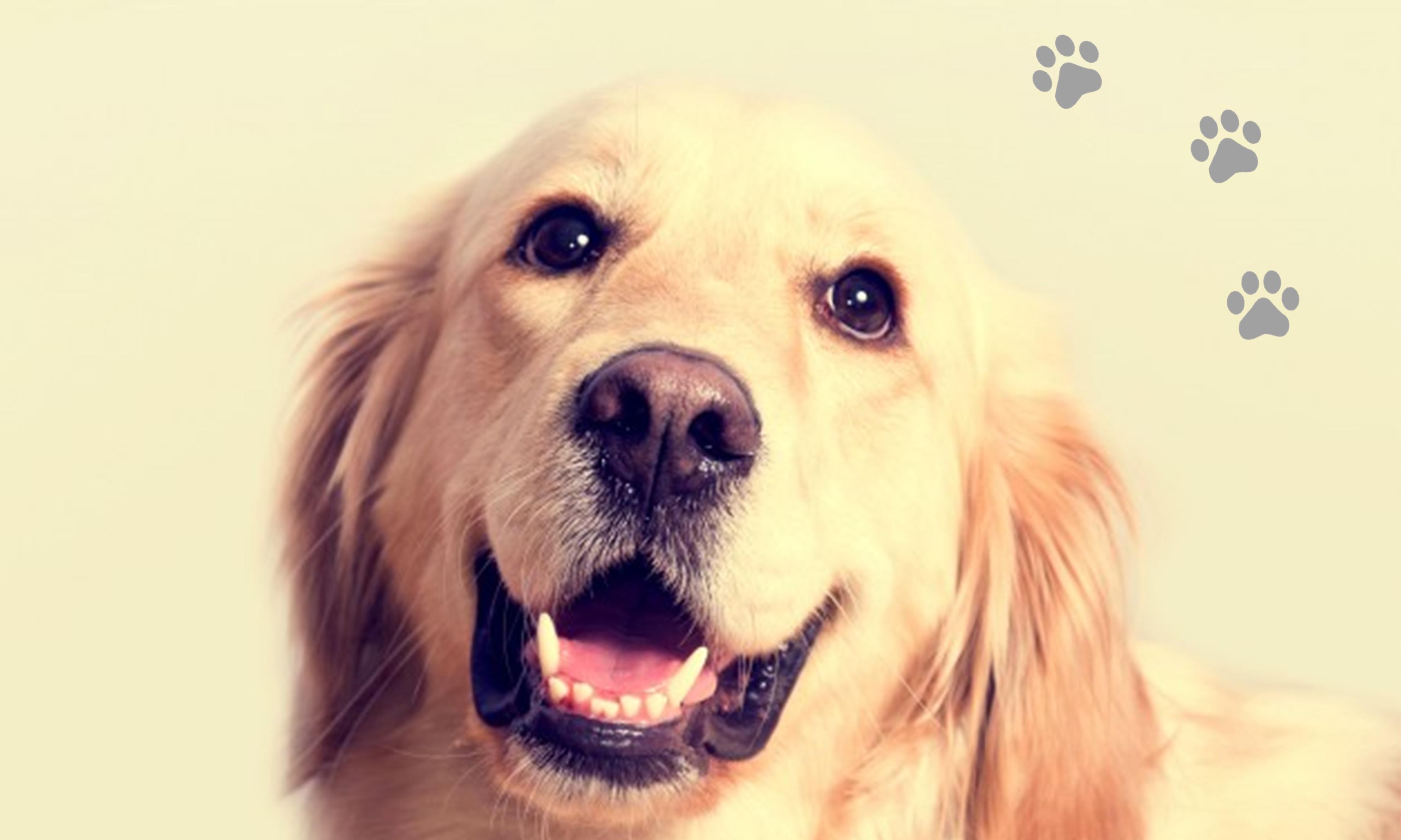 Tener perro puede ayudar a una vida más larga