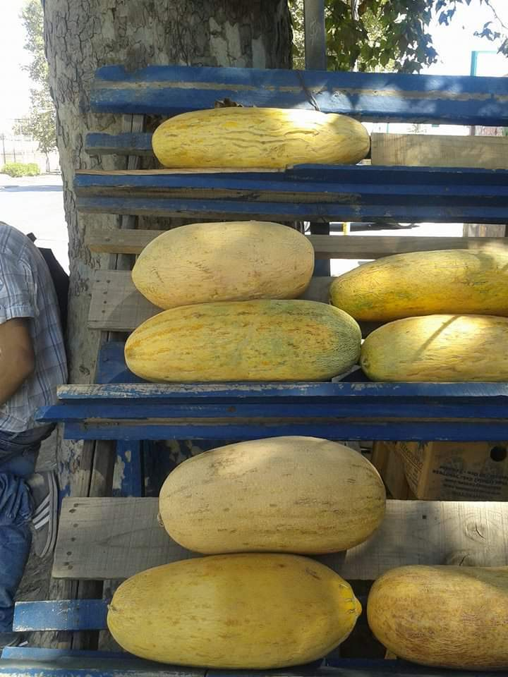 Melón Quique (semillas)