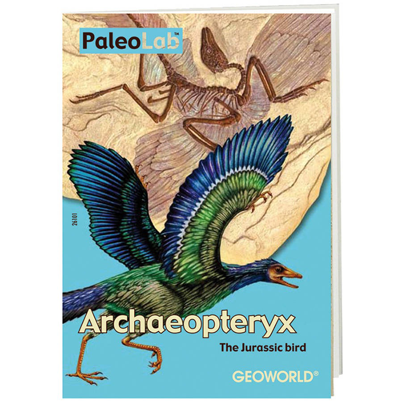 DR. STEVE PALEO LAB ARCHAEOPTERYX
