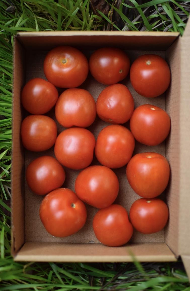 Caja 500 Grs Tomates Cherry