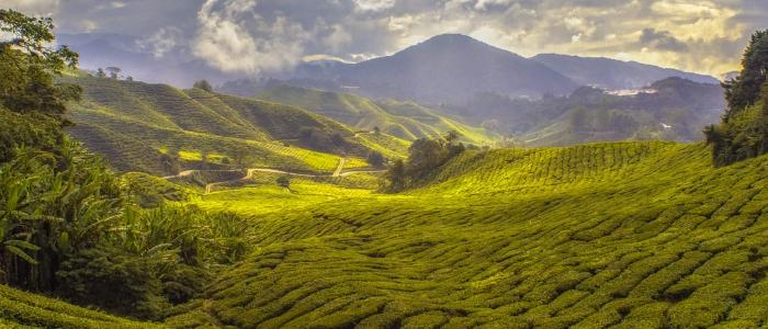 ¿Conoces todos los beneficios del Tea Tree?