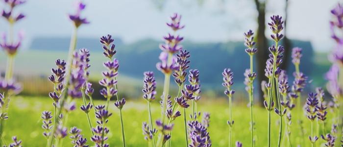 ¿Qué es la astenia primaveral? ¿Cómo pueden ayudar los aceites esenciales a tratar este tipo de condición?