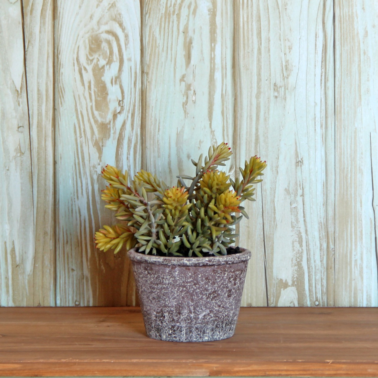 Planta rallito sol artificial