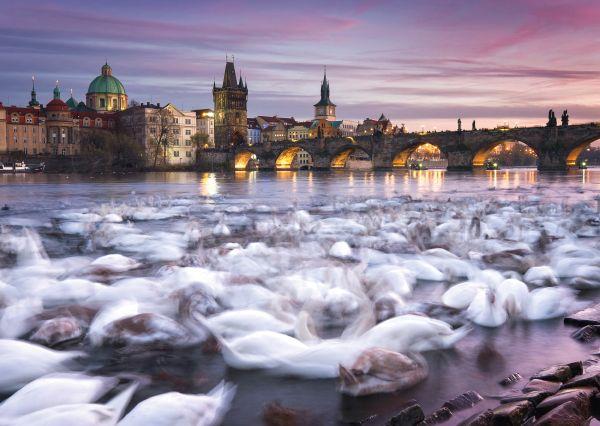 Cisnes en Praga   Puzzle Schmidt 1000 Piezas