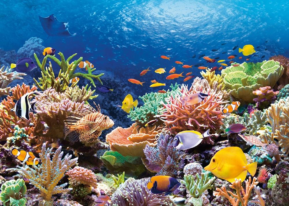 Arrecife de Coral   Puzzle Castorland 1000 Piezas
