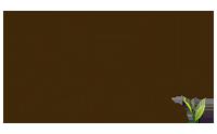 Bitaco es un té organico de alta calidad, cosechado a mano, clasificado como té de especialidad en hoja suelta. El unicó té de Colombia.