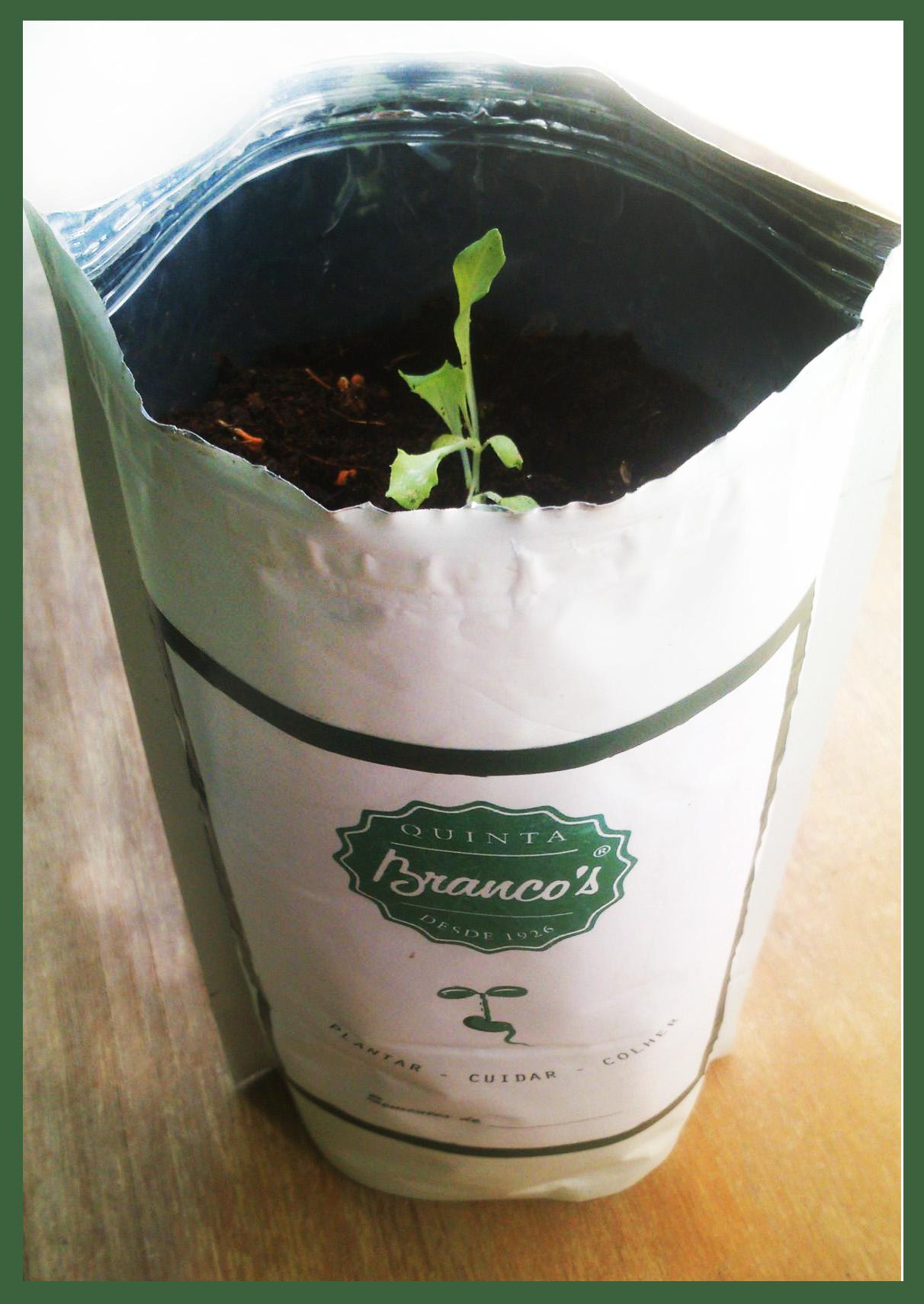 Sementes - Mini horta na sua Casa