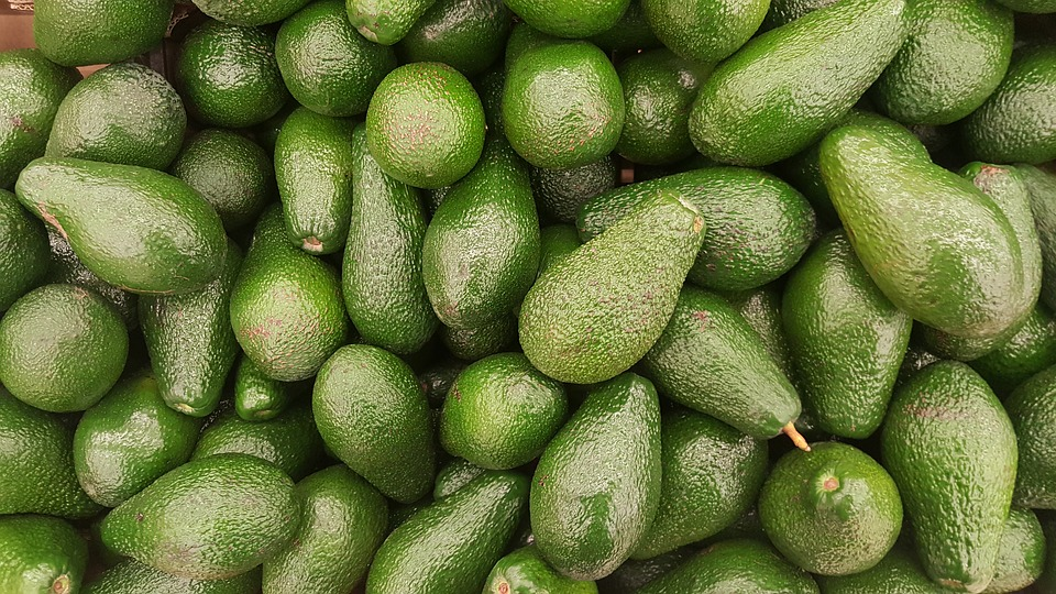 Abacate do Algarve 1 kg