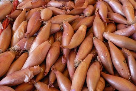 Cebola Chalota